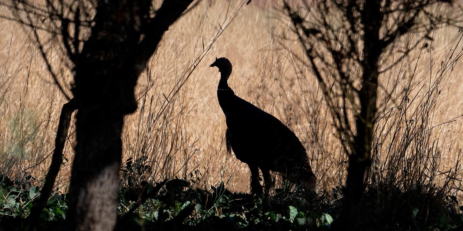 large bird shadow