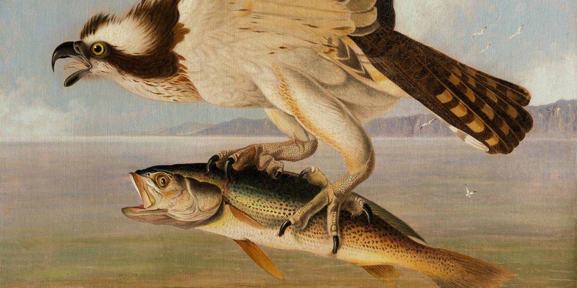 a painting of a bird carrying a fish