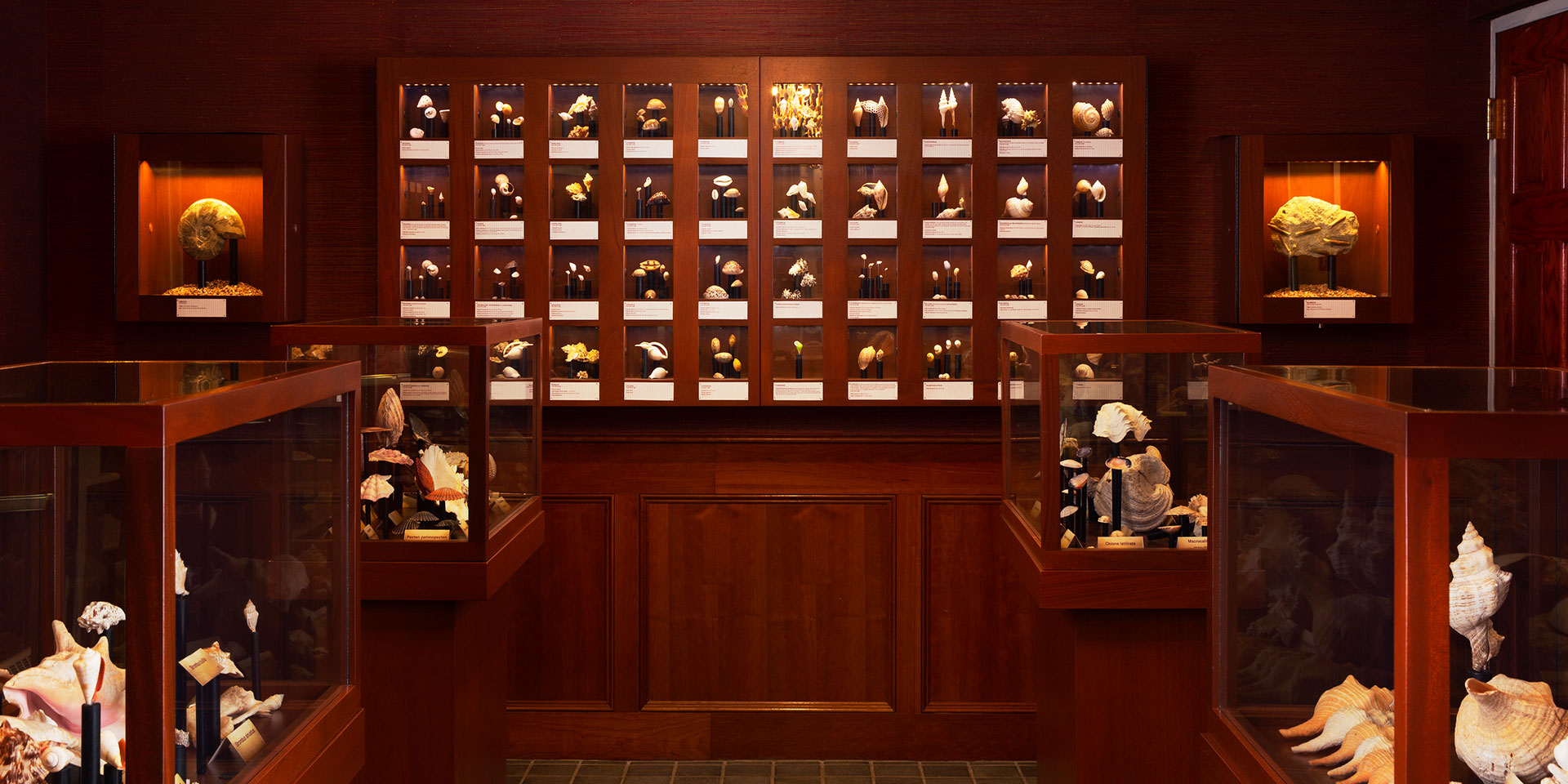 brown wooden wall with an array of picture frames and shells are in glass displays
